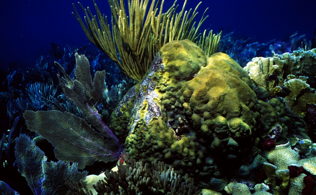 Coral reef and beach on Mexico's Caribbean coast to be insured