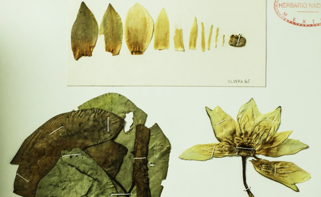 Mexico's green museum, the National Herbarium