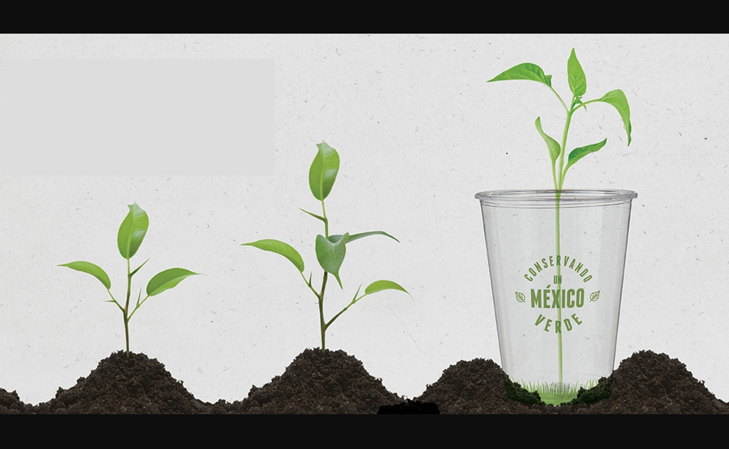 Mexican company sells biodegradable cups made of corn starch