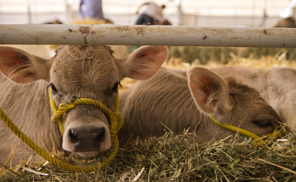 Mexico at the forefront of vaccine production for livestock