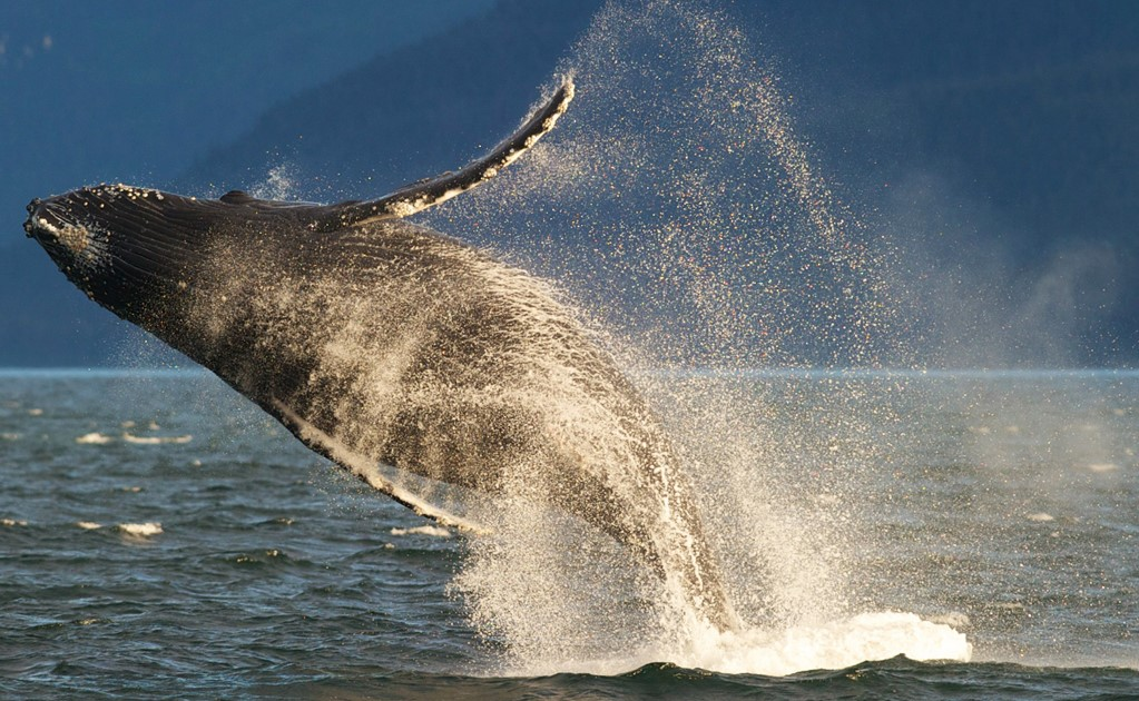 Whale watching in Mexico, when and where?