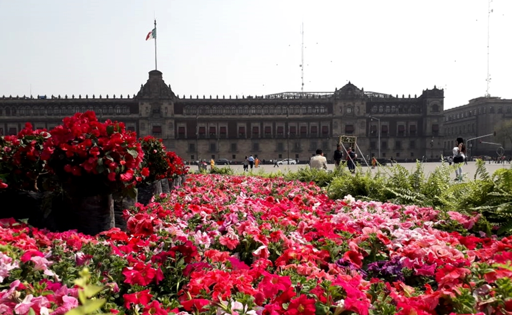 Xochimilco flower beds to celebrate Valentine's Day in Mexico City
