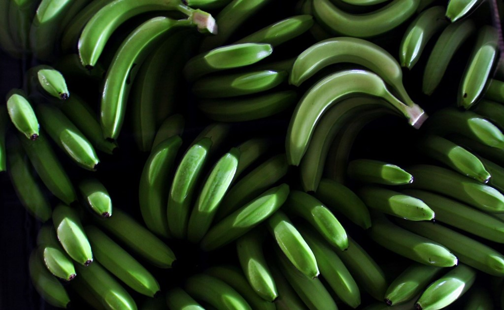Mexican student uses green plantain to fight diabetes
