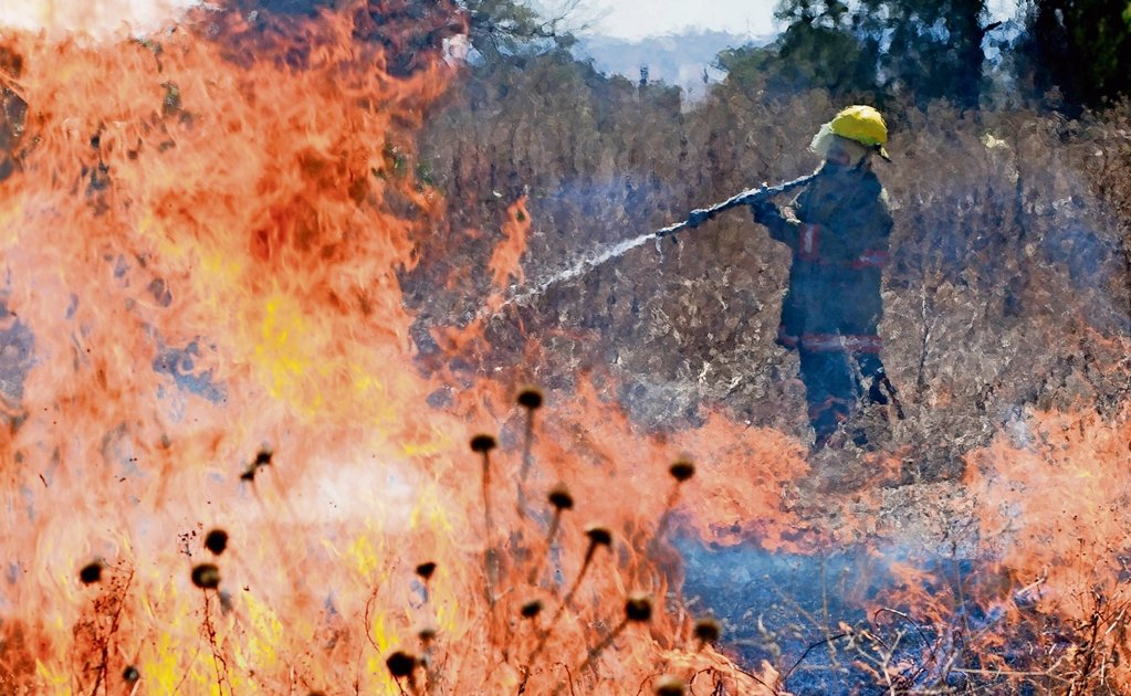 Mexico registers 30 wildfires in 5 states