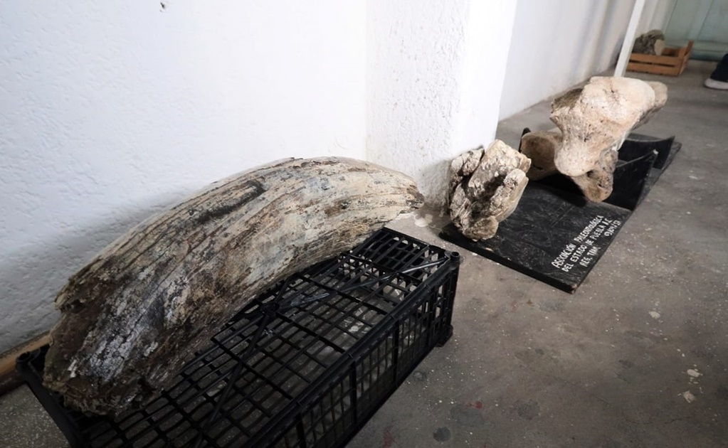 Mammoth remains found in Puebla, Mexico
