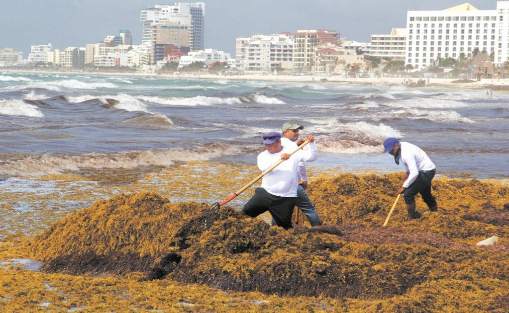Hunting sargassum with Mexican software