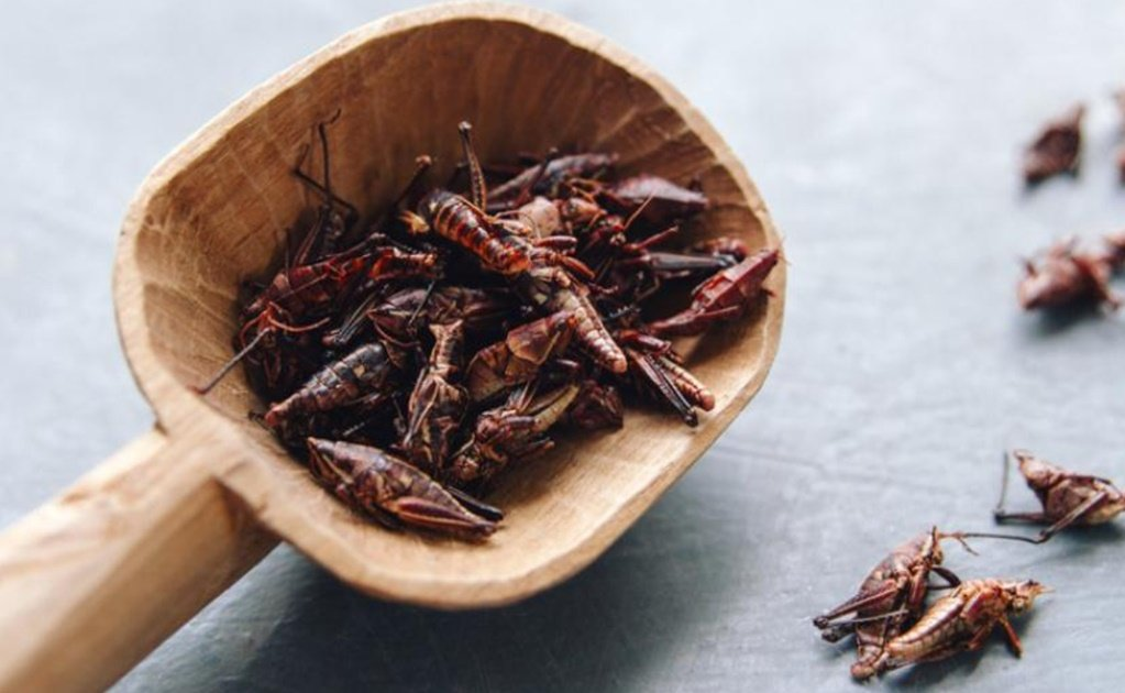 5 health benefits of grasshoppers