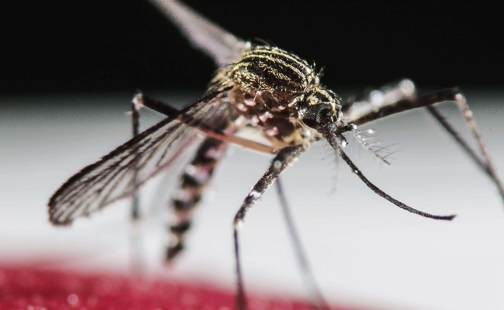 Over 10,000 dengue cases registered in Mexico