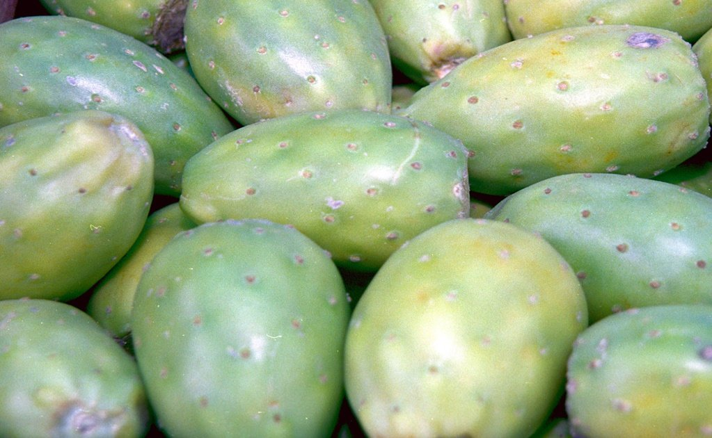 The many benefits of prickly pear fruit