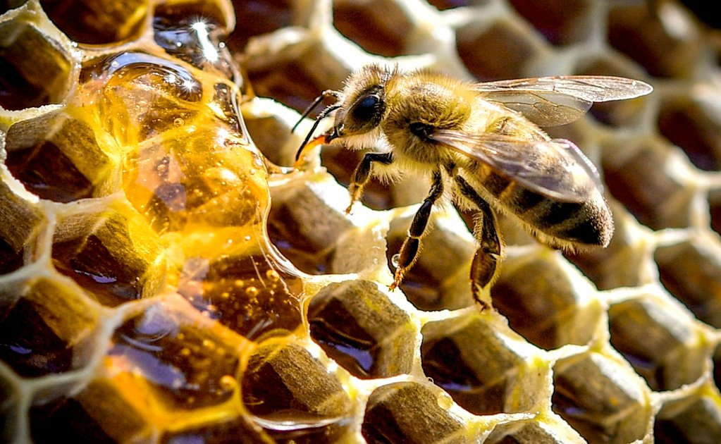 Mexico's beekeeping industry is at a breaking point