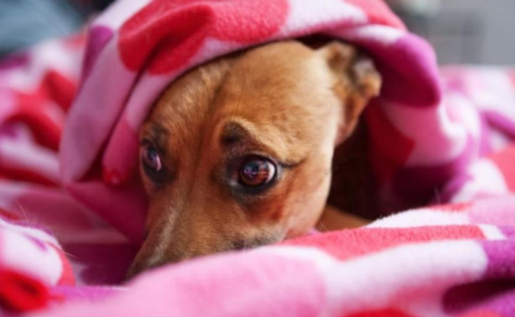 Fireworks, your dog's worst enemy
