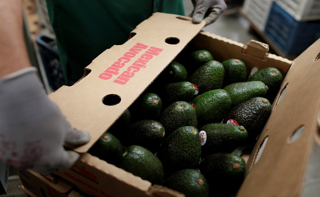 Mexico hits record high on avocado exports for the Super Bowl