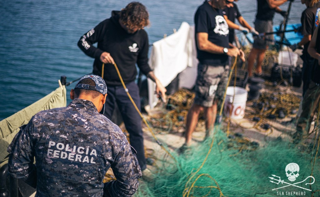 Sea Shepherd activists trying to save the vaquita were attacked by poachers