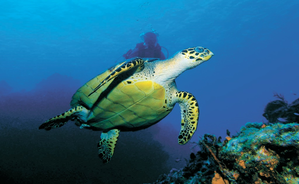Endemic fauna of Cozumel is highly endangered by invasive species
