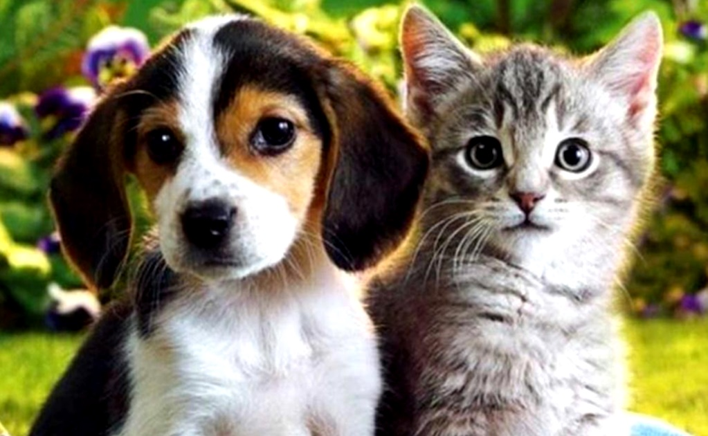 COVID-19: Set your pets for a stress-free quarantine