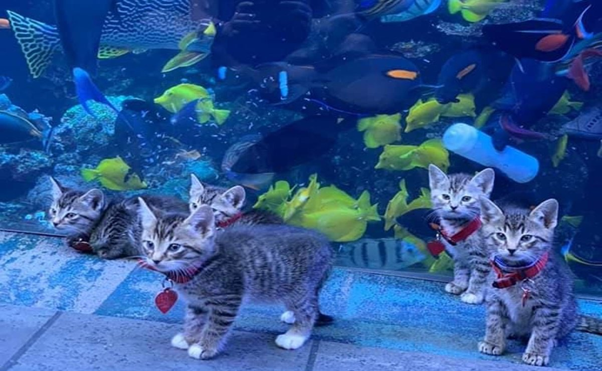 gatitos, acuario, video