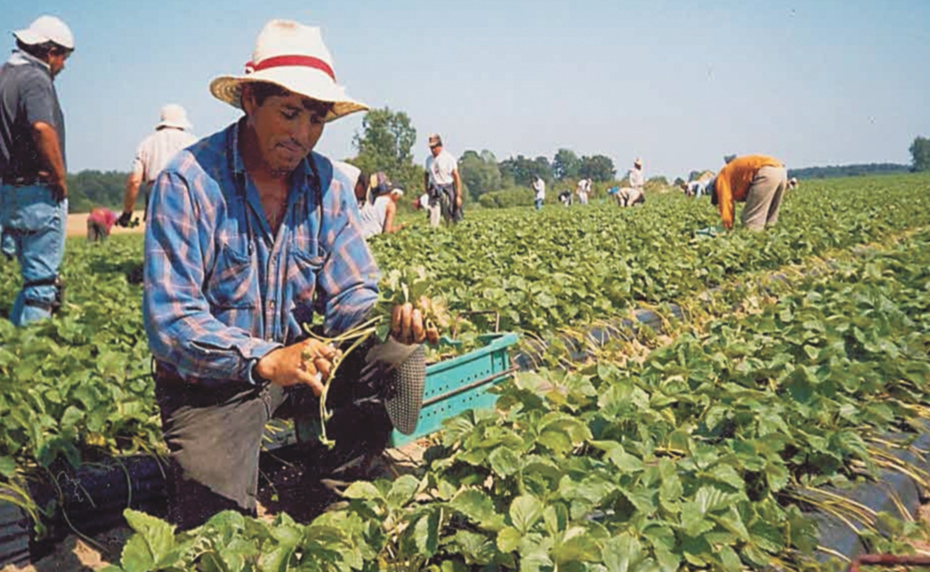 Mexico and Canada agree to improve the working conditions of Mexican farmworkers