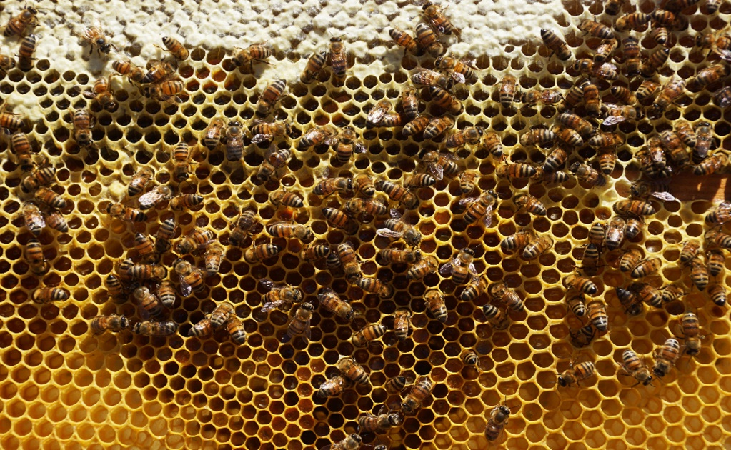 """""""Hotels"""" to protect wild bees in western Mexico"""