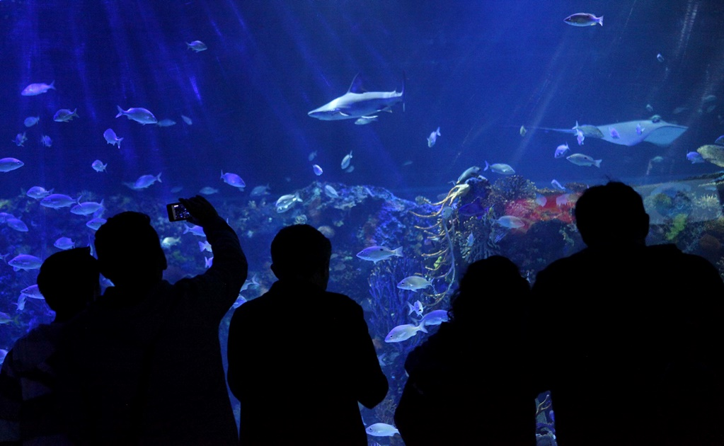Mexico City's aquariums and circuses reopen to the public
