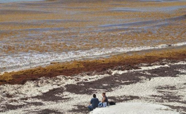 Mexico to spend US$9.1 million on seaweed cleanup