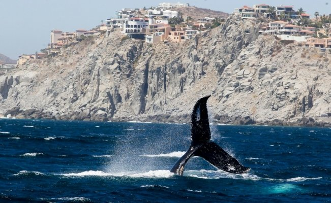 Whale watching season has arrived