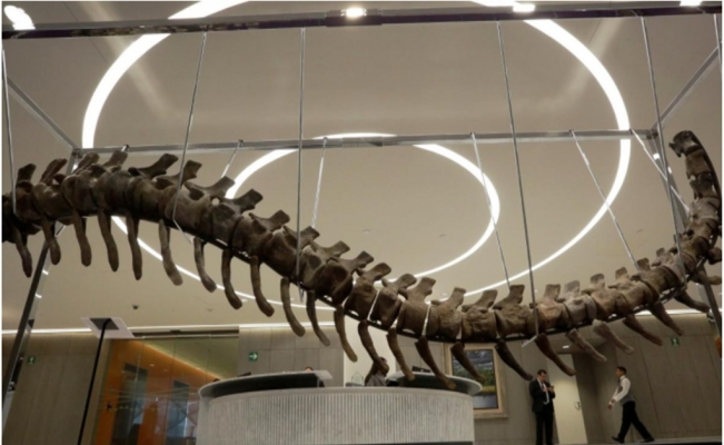 Dinosaur tail in auction for Mexico quake reconstruction