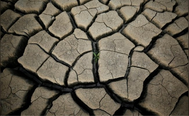 Cape Town: A warning to a thirsty world