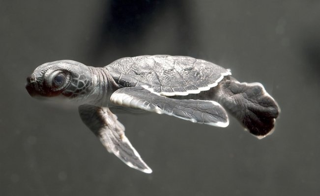 What you need to know about World Turtle Day
