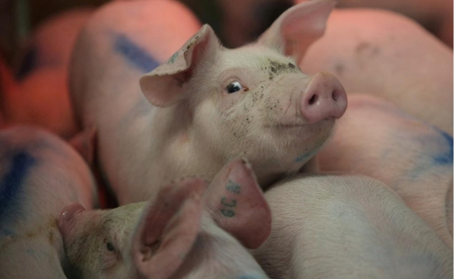 Mexico can import pork from 10 countries besides USA