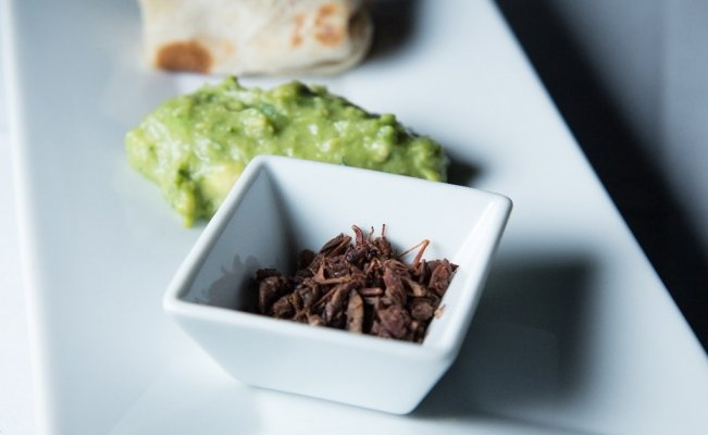 Try the Edible Insects Feast if you dare