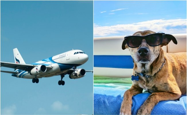 mascotas_avion_documentacion