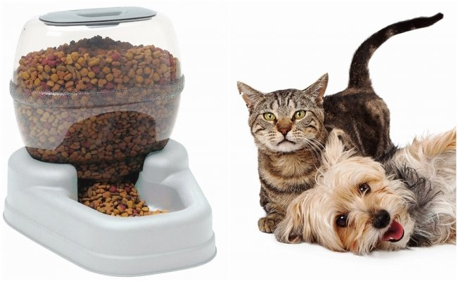 Pet food industry in Mexico shows rapid growth