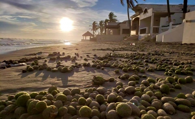 Mysterious green balls wash up on Mexican shore