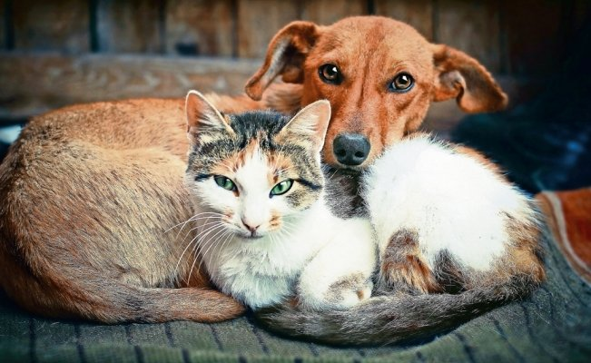 How to protect your pet from cold weather