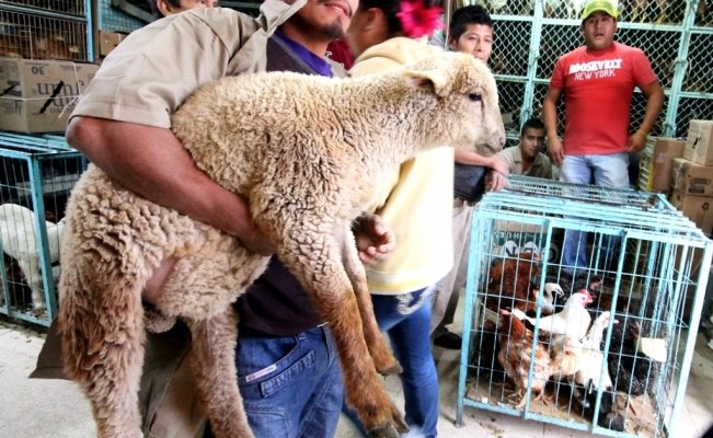 Citizens protest against animal abuse in Mexico City's Sonora Market