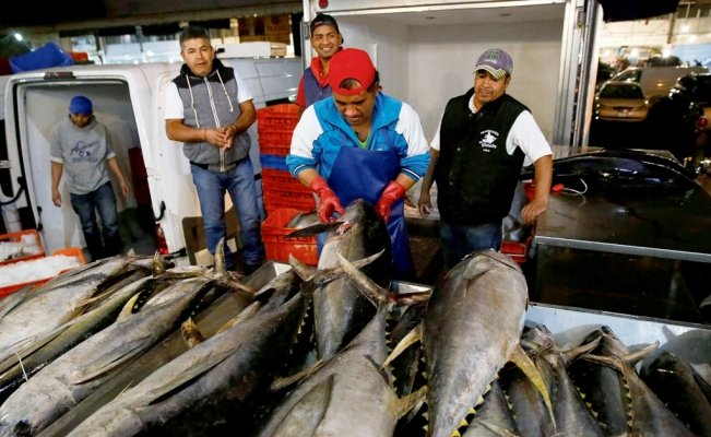 Mexican tuna industry will have to modify fishing methods