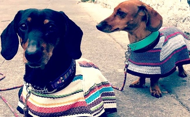 Mexican ponchos for your fur babies