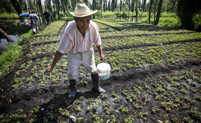Chinampas: The key to sustainable food production