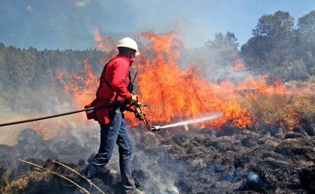 Wildfires raging in central and southern Mexico