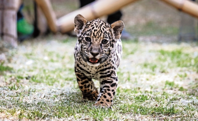 Mexico has more endangered species than any other country