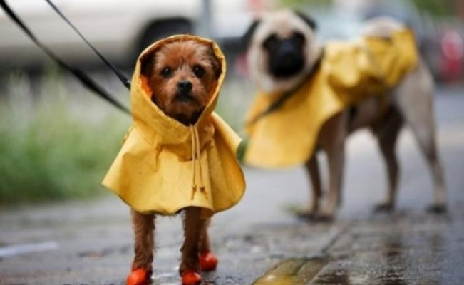 5 pet diseases in rainy season