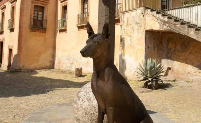 Xoloitzcuintle: The Mexican hairless dog that resembles Egyptian god Anubis