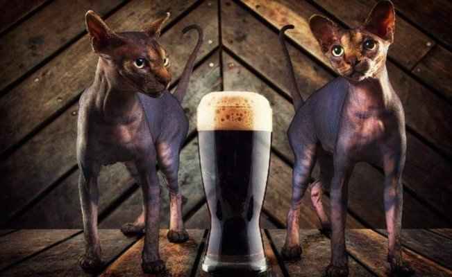 Meow, a beer to help rescued cats