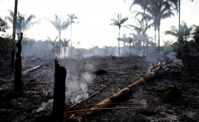 Amazon wildfires: Brazil reports record surge in forest fires