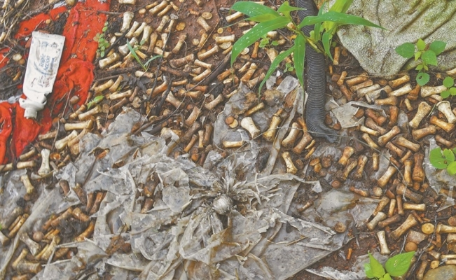 2,000 bone fragments found in Sinaloa