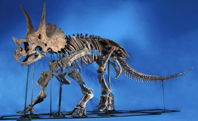 Mexican paleontologists uncover bone pathologies in dinosaurs