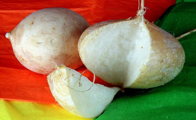 Jicamas are also known as Mexican turnips or yam beans