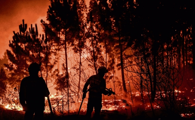 Mexico's wildfire season does not falter despite the pandemic