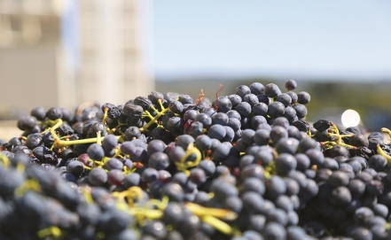 General Law for Promotion of the Wine Industry is approved