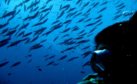 The loud spawning spectacle of Mexican fish